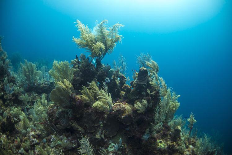 Coral Reef Ocean