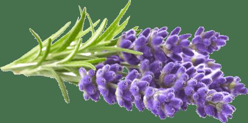 Lavender Left