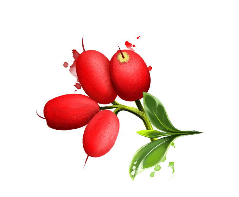 Riberry Syzygium Luehmannii