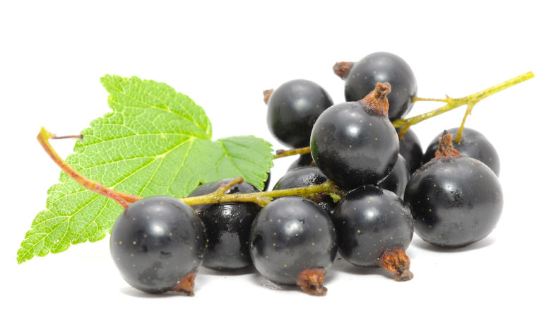 Ribes Nigrum Black Currant Oil